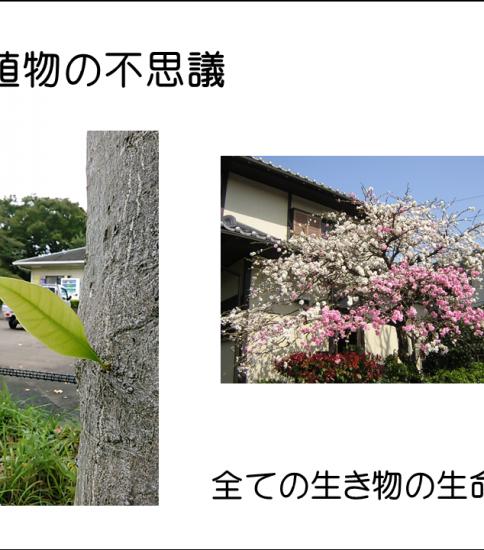 H30.2.16第26回カフェ「植物の不思議」2丁目川口さん、開催